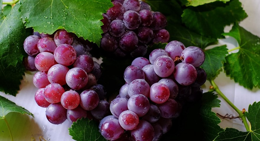 Grapes 1480. jpg