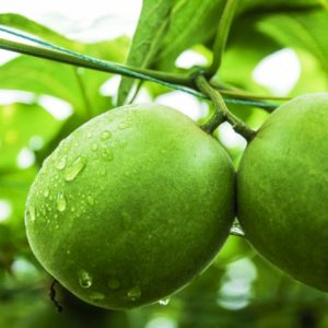 what is ….. monk fruit?