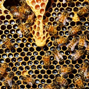 all honey is not created equal…