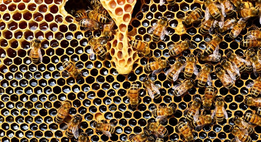 honeycomb banner with bees